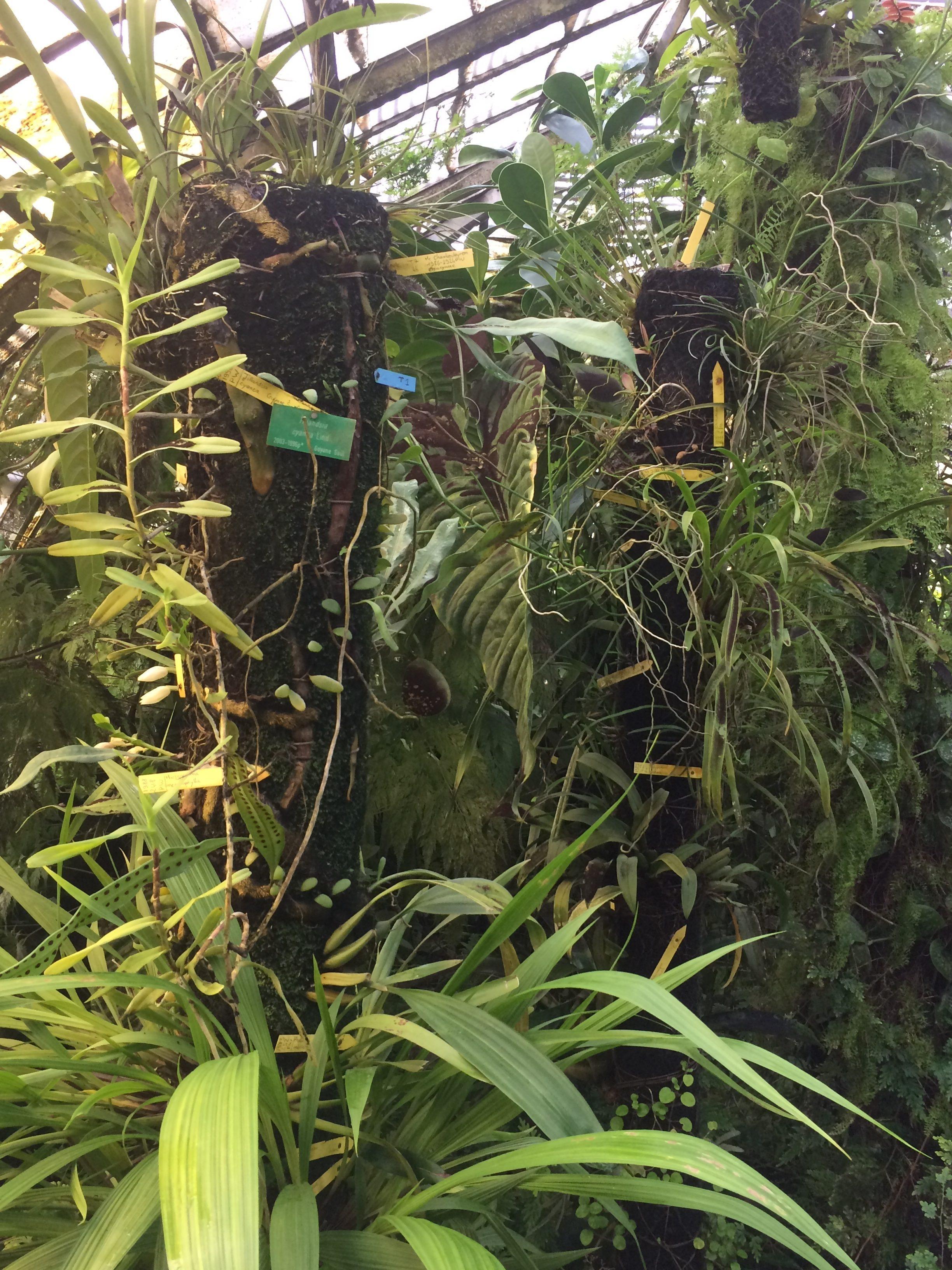 Sortie au jardin des plantes de Nantes (5ème) | Collège La Durantiere